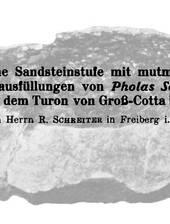Spurenfossilien im unterturonen Sandstein