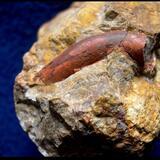 Galerie: Polychaeta