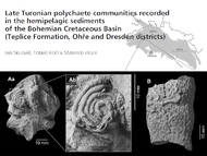 Quelle: Sklenář et al. 2013. Late Turonian polychaete communities recorded in the hemipelagic sediments of the Bohemian Cretaceous Basin (Teplice Formation, Ohře and Dresden districts)