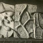 Spurenkomplexe: <i>Spongites saxonicus</i>