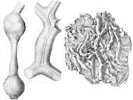 Spurenfossilien