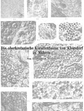 Monographie zur mährischen Korallenfauna