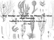 J. Velenovsky: Pflanzenreste aus den Perucer Schichten