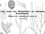 J. Velenovskys Monographie zur Flora der böhmischen Kreide
