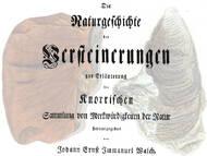 Über im 18. Jahrhundert beschriebene Fossilien der sächsischen Kreide