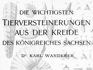 K. Wanderer: Tierversteinerungen aus der Kreide Sachsens