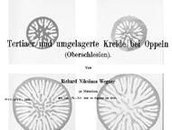 R. N. Wegner über das Teritär und die Kreide in Oppeln (Opole), Schlesien