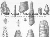 V. Weinzettl über Schnecken der Familie Nerinidae
