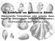 J. Woldrich über eine obercenomane Fauna in Tscheschien