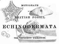 Monographie zu den Stachelhäutern des englischen Chalks (Kreide)