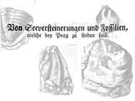 F. Zeno: Fossilien von bei Prag